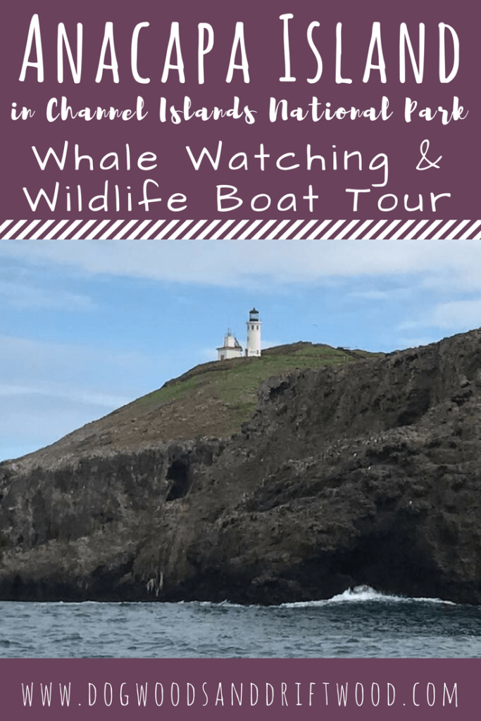 Whale Watching & Wildlife Boat Tour at Anacapa Island in Channel Islands National Park