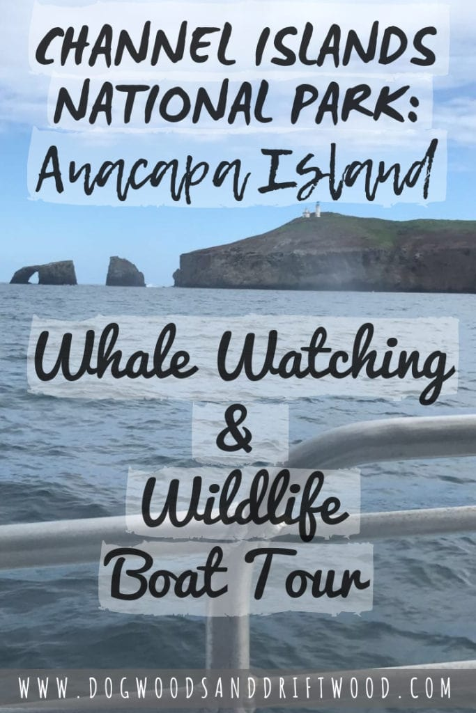 Click to read about my experience with the Island Packer's Whale Watching & Wildlife Boat Tour around Anacapa Island in Channel Islands National Park, California! #channelislands #anacapa #anacapaisland #whalewatching