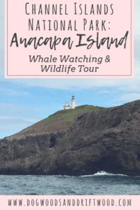 Channel Islands National Park_ Anacapa Island Whale Watching and Wildlife Tour