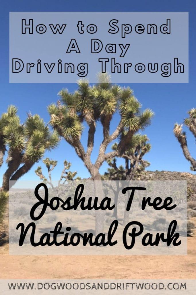 How to drive through Joshua Tree National Park