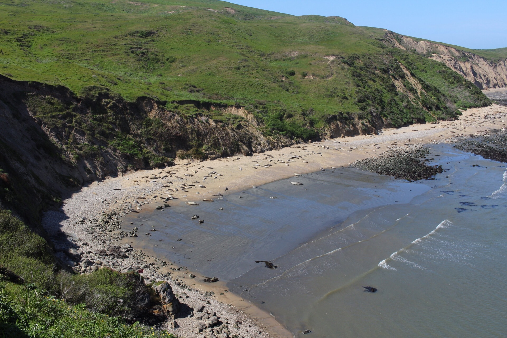 Elephant Seal Overlook in Point Reyes National Seashore, California