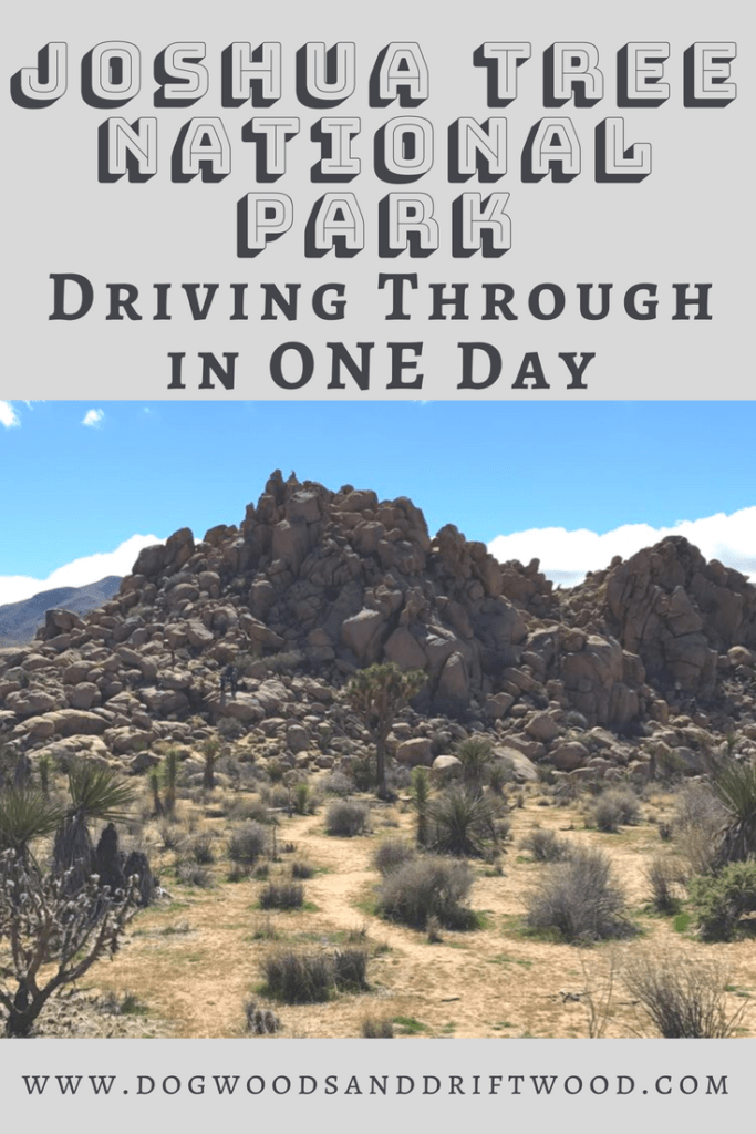 Things to do in a one day trip to Joshua Tree National Park in California! This post includes a map, hiking, tips for visiting, etc. You can use this itinerary to see Key's View, Skull Rock, Chollo Cactus Garden and more! #joshuatree #nationalpark #skullrock