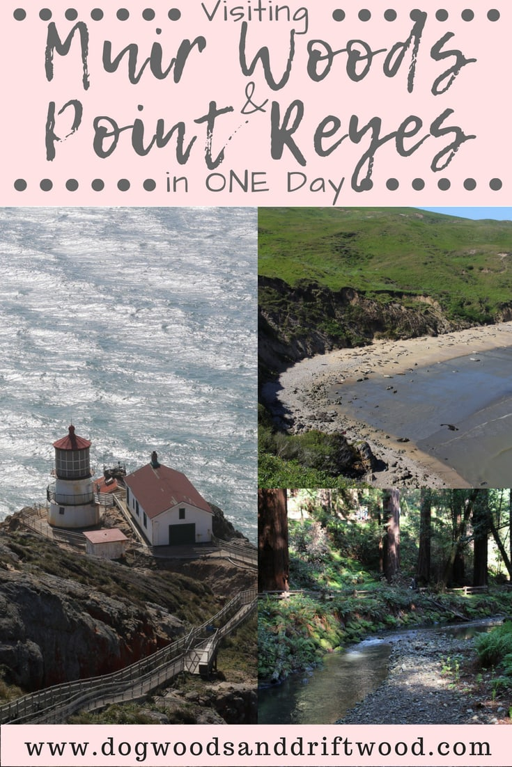 Visiting Muir Woods and Point Reyes in One Day
