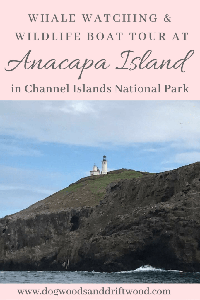 Whale Watching & Wildlife Boat Tour of Anacapa Island in Channel Islands National Park