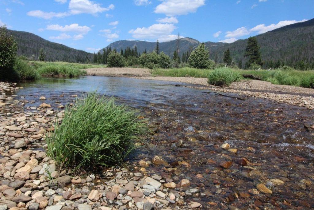 creek in a meadow