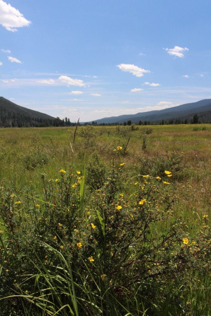 meadow with wildflowers: rocky mountain national park 2 day itinerary