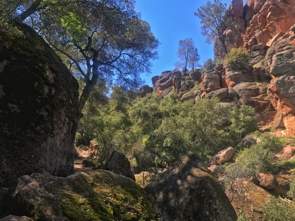 Volcanic breccia makes up the rock formations here in Pinnacles National Park