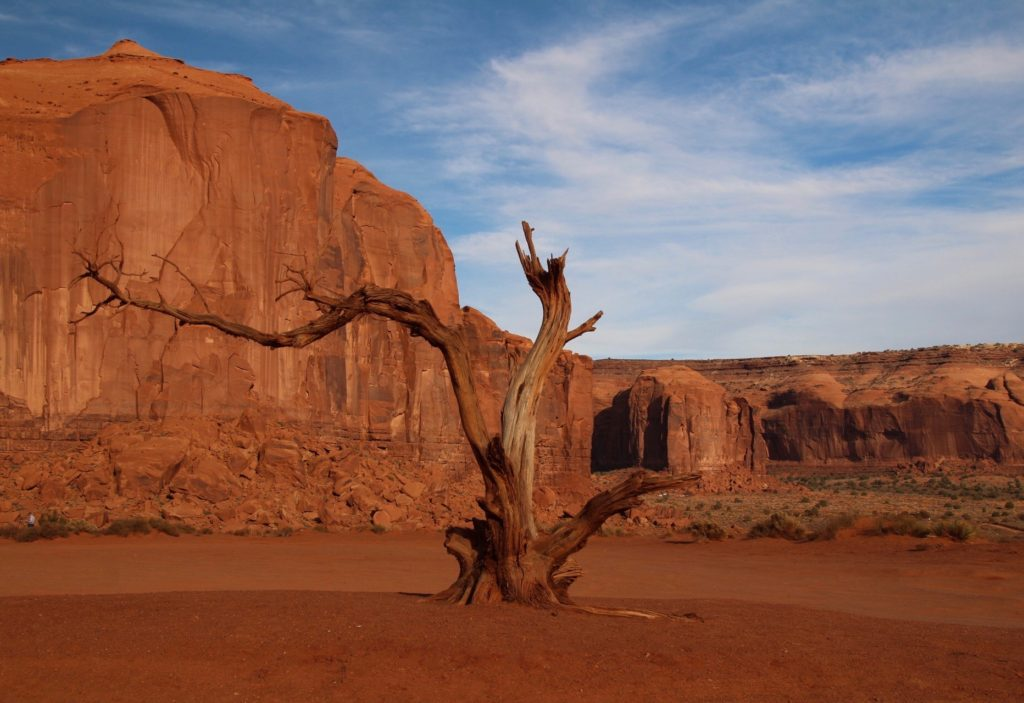 "Tree located at ""The Thumb"" roundabout in Monument Valley."