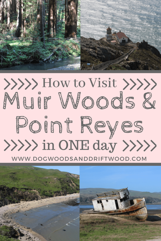 See Muir Woods & Point Reyes in the Same Day