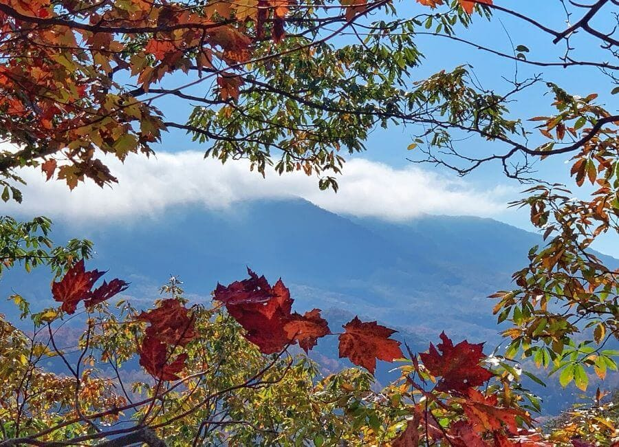 view of smoky mountains through fall leaves